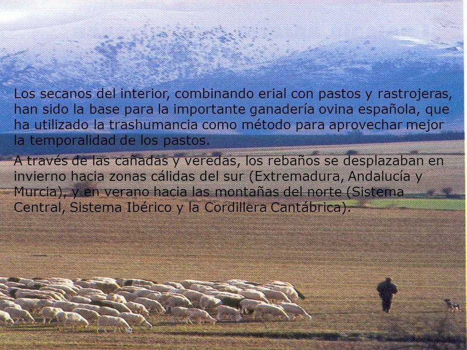 Los secanos del interior, combinando erial con pastos y rastrojeras, han sido la base para la importante ganadería ovina española, que ha utilizado la