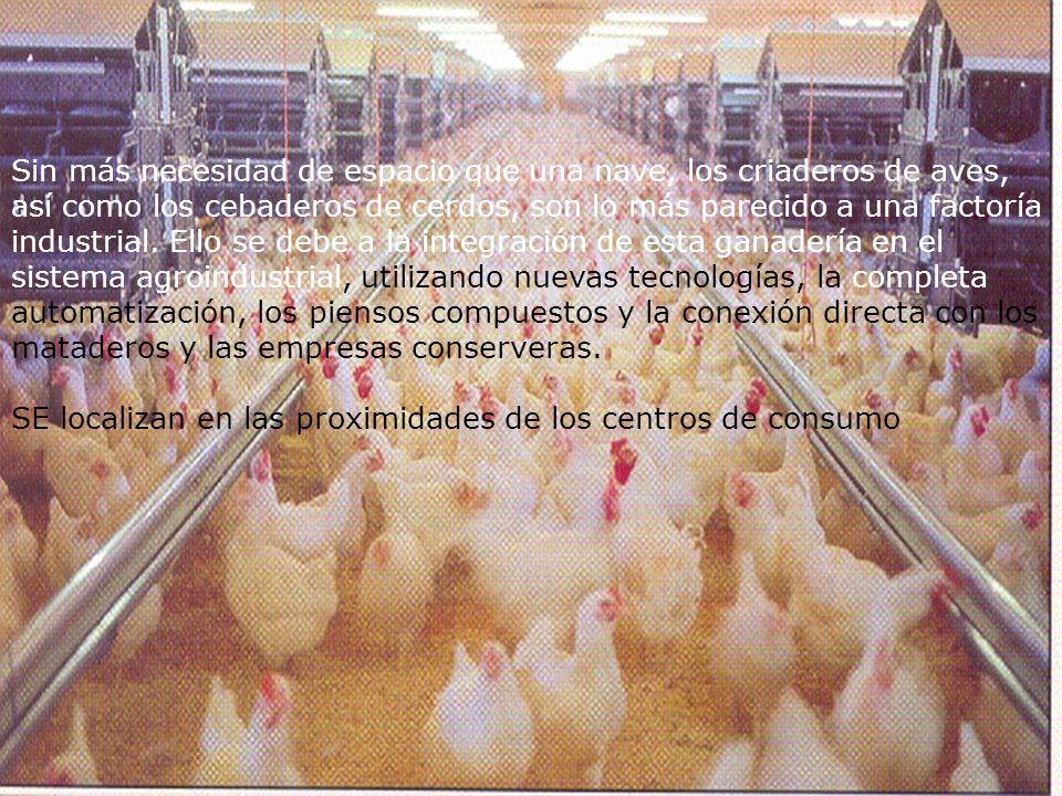 Sin más necesidad de espacio que una nave, los criaderos de aves, así como los cebaderos de cerdos, son lo más parecido a una factoría industrial. Ell