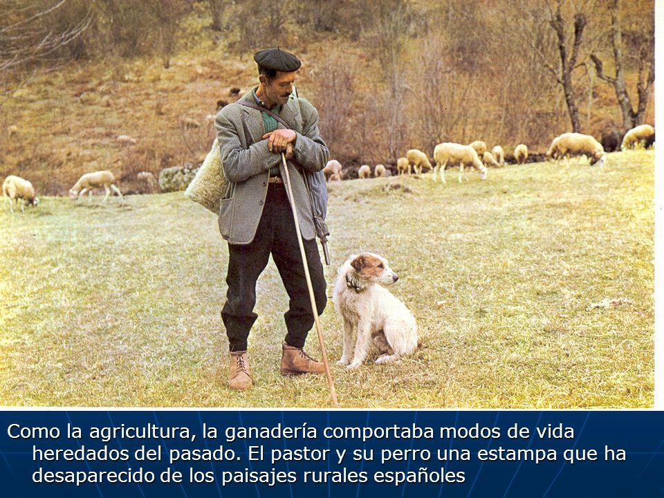 Como la agricultura, la ganadería comportaba modos de vida heredados del pasado. El pastor y su perro una estampa que ha desaparecido de los paisajes