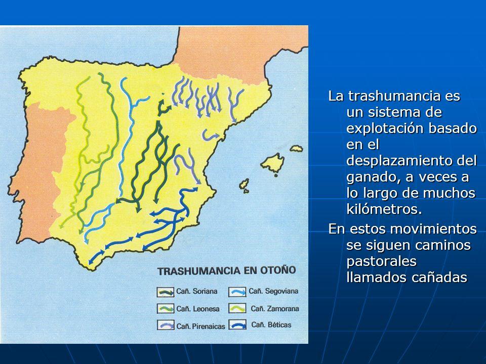 La trashumancia es un sistema de explotación basado en el desplazamiento del ganado, a veces a lo largo de muchos kilómetros. En estos movimientos se