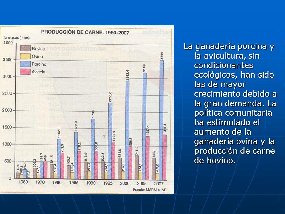 La ganadería porcina y la avicultura, sin condicionantes ecológicos, han sido las de mayor crecimiento debido a la gran demanda. La política comunitar