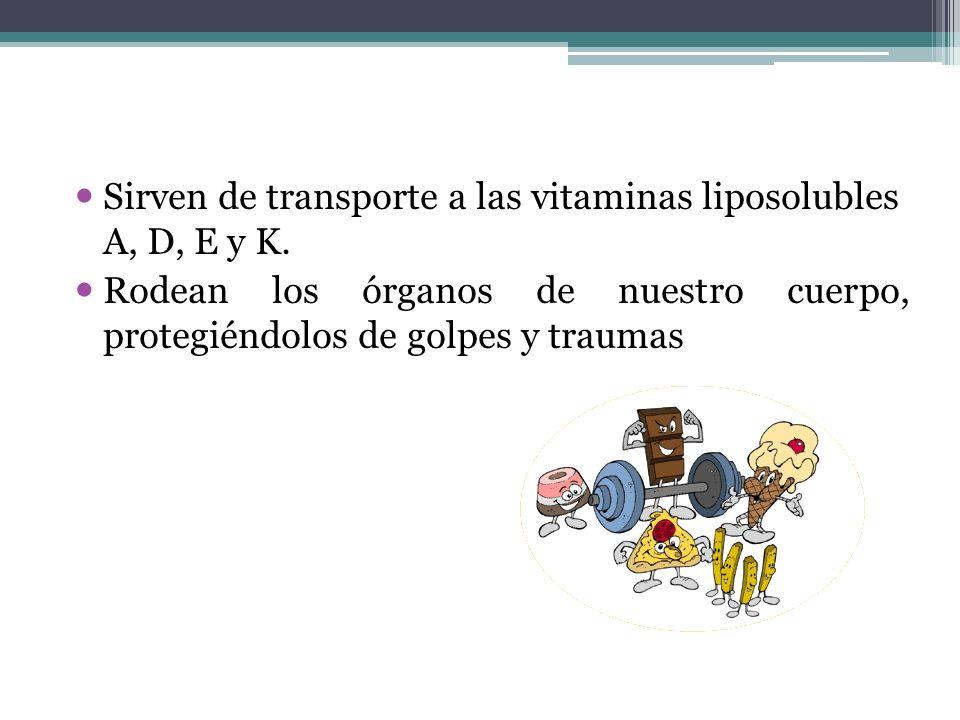 Sirven de transporte a las vitaminas liposolubles A, D, E y K. Rodean los órganos de nuestro cuerpo, protegiéndolos de golpes y traumas