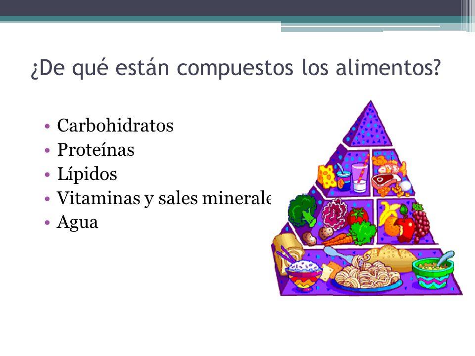 ¿De qué están compuestos los alimentos? Carbohidratos Proteínas Lípidos Vitaminas y sales minerales Agua