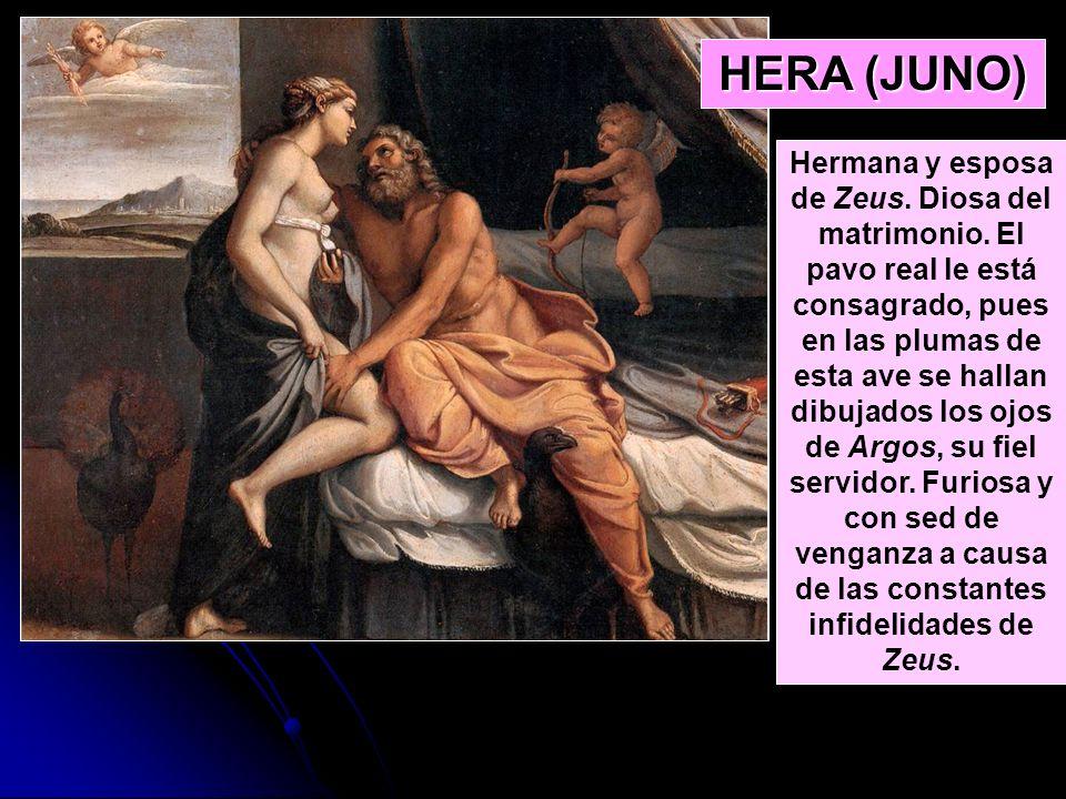 HERA (JUNO) Hermana y esposa de Zeus. Diosa del matrimonio. El pavo real le está consagrado, pues en las plumas de esta ave se hallan dibujados los oj