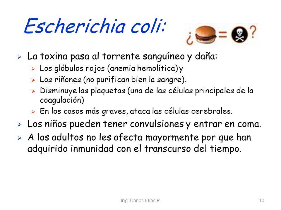 Ing. Carlos Elías P.10 Escherichia coli: La toxina pasa al torrente sanguíneo y daña: Los glóbulos rojos (anemia hemolítica) y Los riñones (no purific