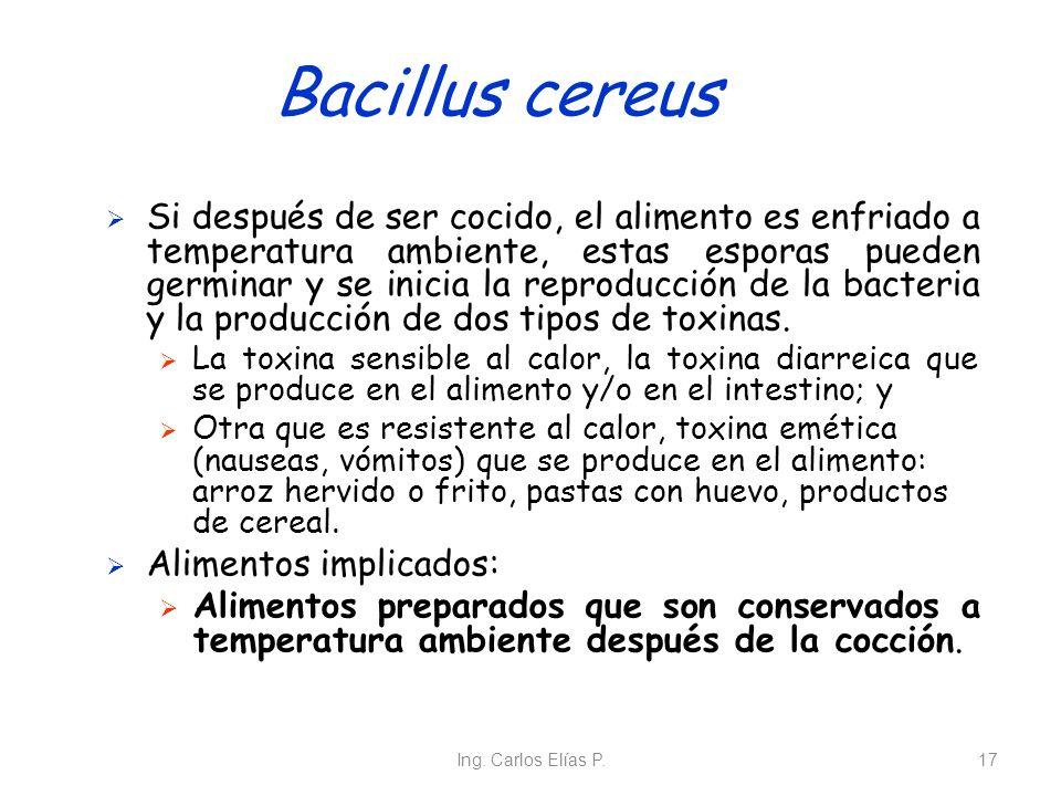 Ing. Carlos Elías P.17 Bacillus cereus Si después de ser cocido, el alimento es enfriado a temperatura ambiente, estas esporas pueden germinar y se in