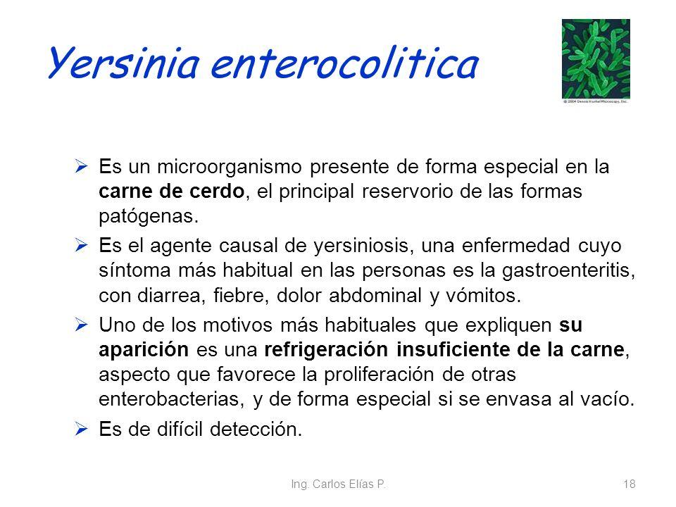 Yersinia enterocolitica Es un microorganismo presente de forma especial en la carne de cerdo, el principal reservorio de las formas patógenas. Es el a