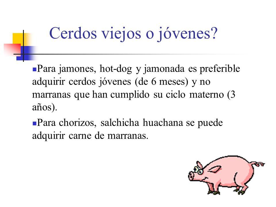 Cerdos viejos o jóvenes? Para jamones, hot-dog y jamonada es preferible adquirir cerdos jóvenes (de 6 meses) y no marranas que han cumplido su ciclo m