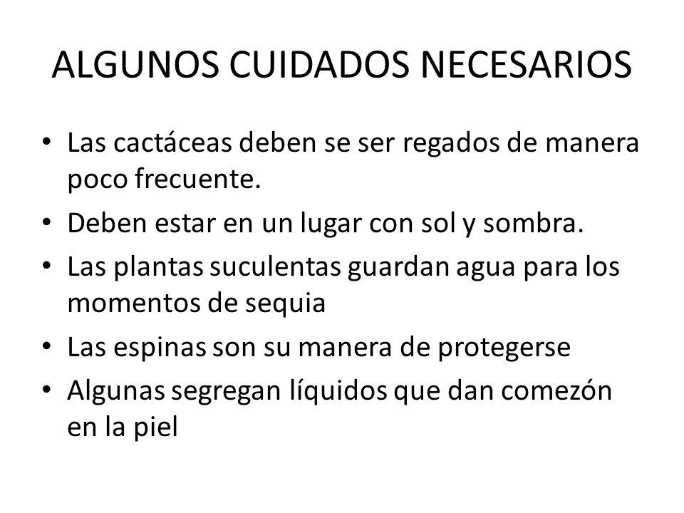 ALGUNOS CUIDADOS NECESARIOS Las cactáceas deben se ser regados de manera poco frecuente. Deben estar en un lugar con sol y sombra. Las plantas suculen