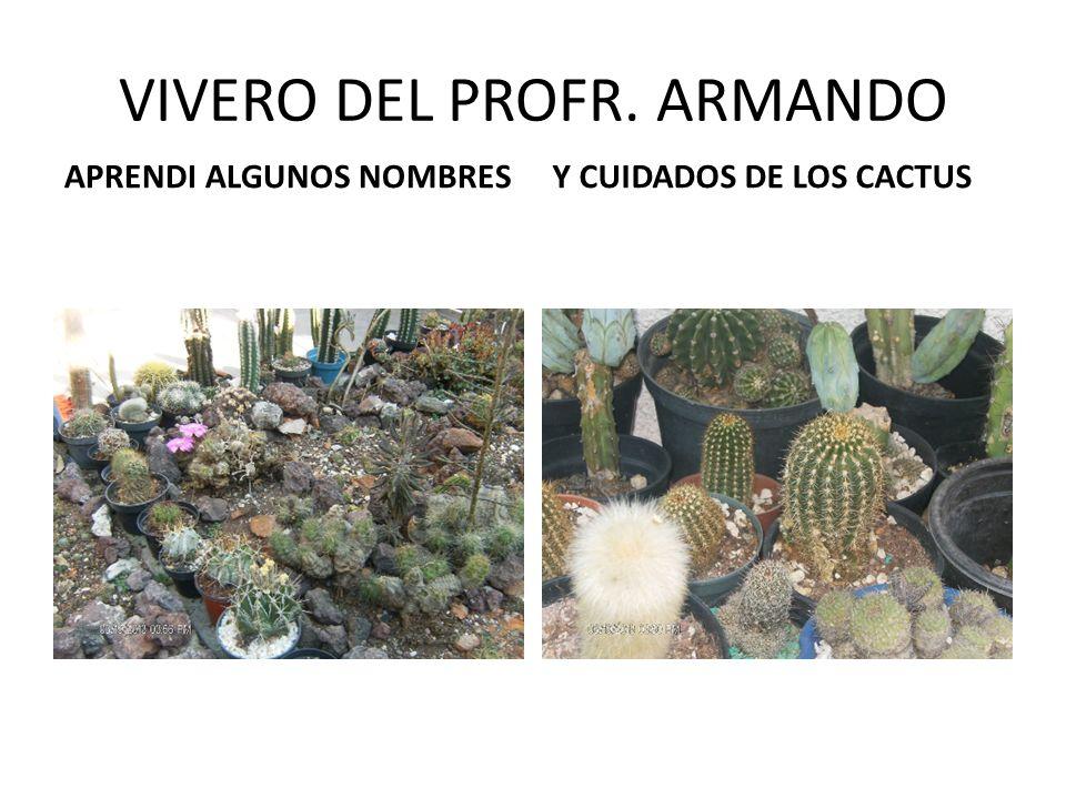 VIVERO DEL PROFR. ARMANDO APRENDI ALGUNOS NOMBRESY CUIDADOS DE LOS CACTUS