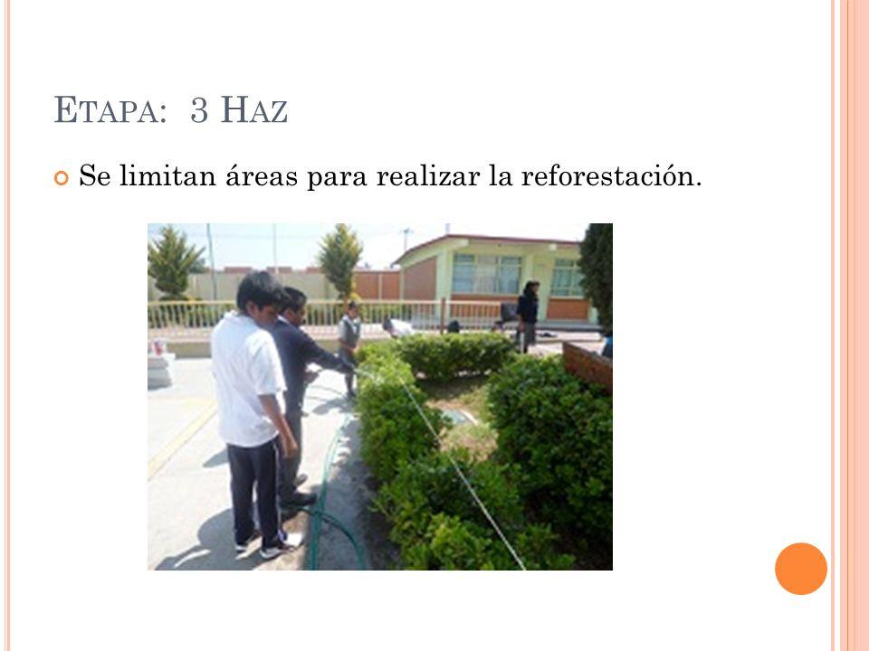 E TAPA : 3 H AZ Se limitan áreas para realizar la reforestación.