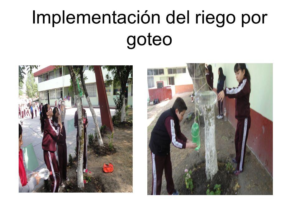 Implementación del riego por goteo