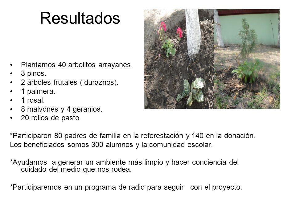 Resultados Plantamos 40 arbolitos arrayanes. 3 pinos. 2 árboles frutales ( duraznos). 1 palmera. 1 rosal. 8 malvones y 4 geranios. 20 rollos de pasto.
