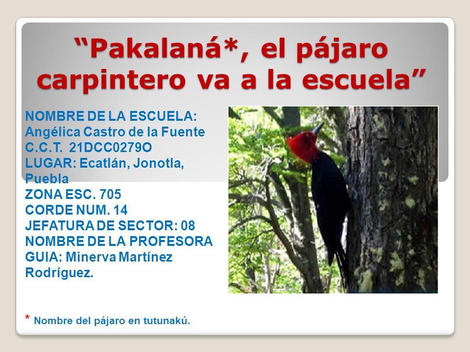 NOMBRE DE LA ESCUELA: Angélica Castro de la Fuente C.C.T. 21DCC0279O LUGAR: Ecatlán, Jonotla, Puebla ZONA ESC. 705 CORDE NUM. 14 JEFATURA DE SECTOR: 0