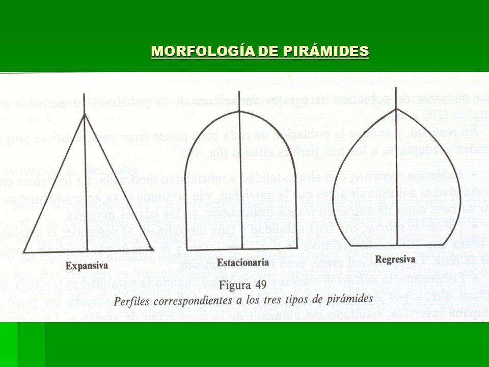 MORFOLOGÍA DE PIRÁMIDES MORFOLOGÍA DE PIRÁMIDES