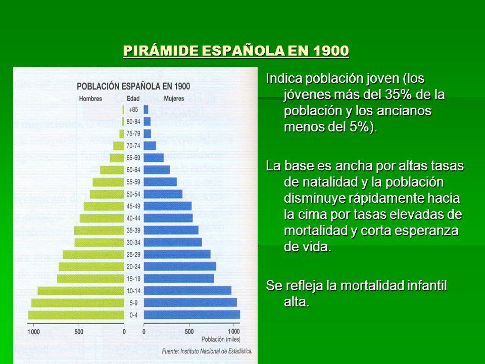 PIRÁMIDE ESPAÑOLA EN 1900 PIRÁMIDE ESPAÑOLA EN 1900 Indica población joven (los jóvenes más del 35% de la población y los ancianos menos del 5%). La b