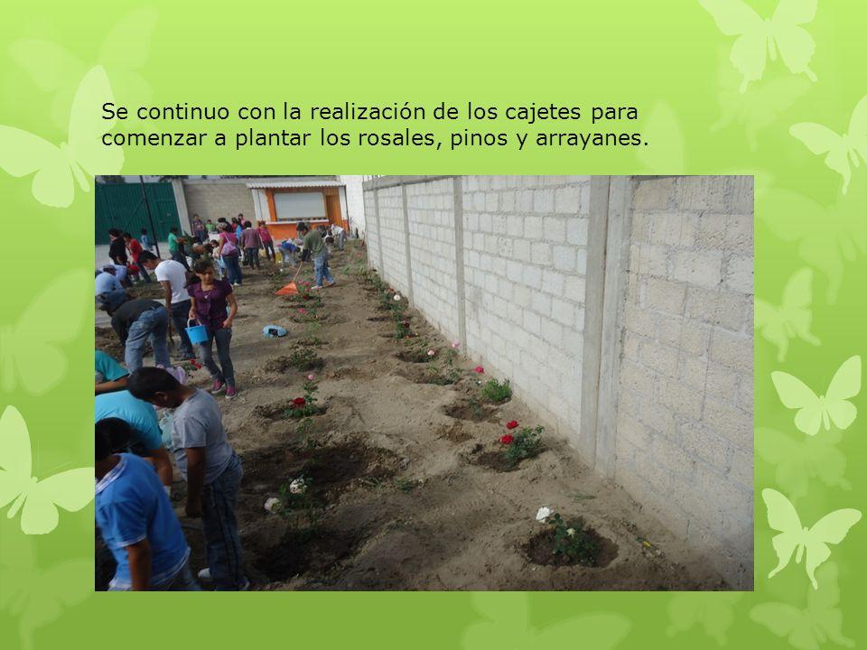 Se continuo con la realización de los cajetes para comenzar a plantar los rosales, pinos y arrayanes.