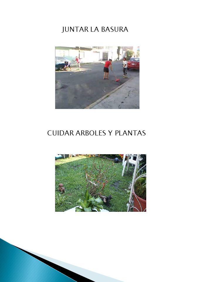 JUNTAR LA BASURA CUIDAR ARBOLES Y PLANTAS