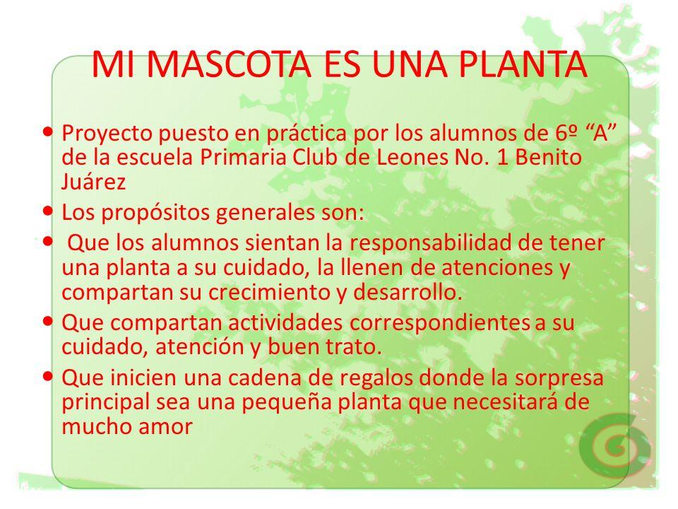MI MASCOTA ES UNA PLANTA Proyecto puesto en práctica por los alumnos de 6º A de la escuela Primaria Club de Leones No. 1 Benito Juárez Los propósitos