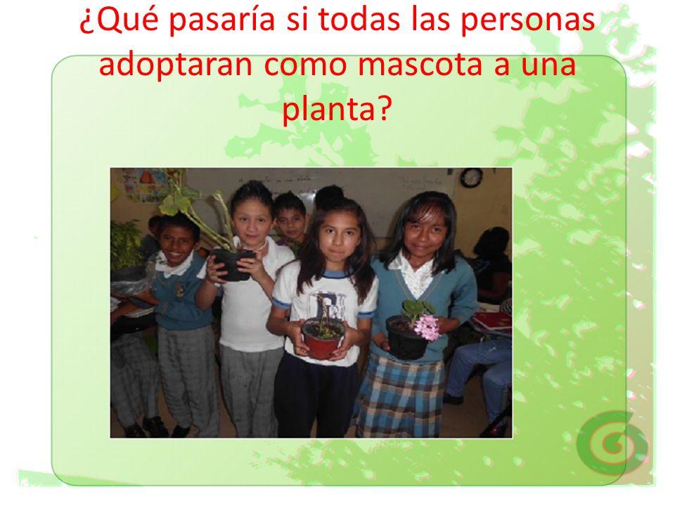 ¿Qué pasaría si todas las personas adoptaran como mascota a una planta?