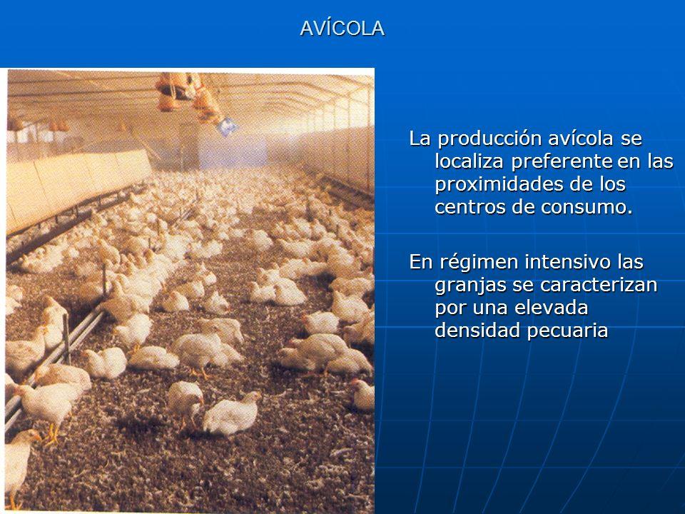 AVÍCOLA La producción avícola se localiza preferente en las proximidades de los centros de consumo. En régimen intensivo las granjas se caracterizan p