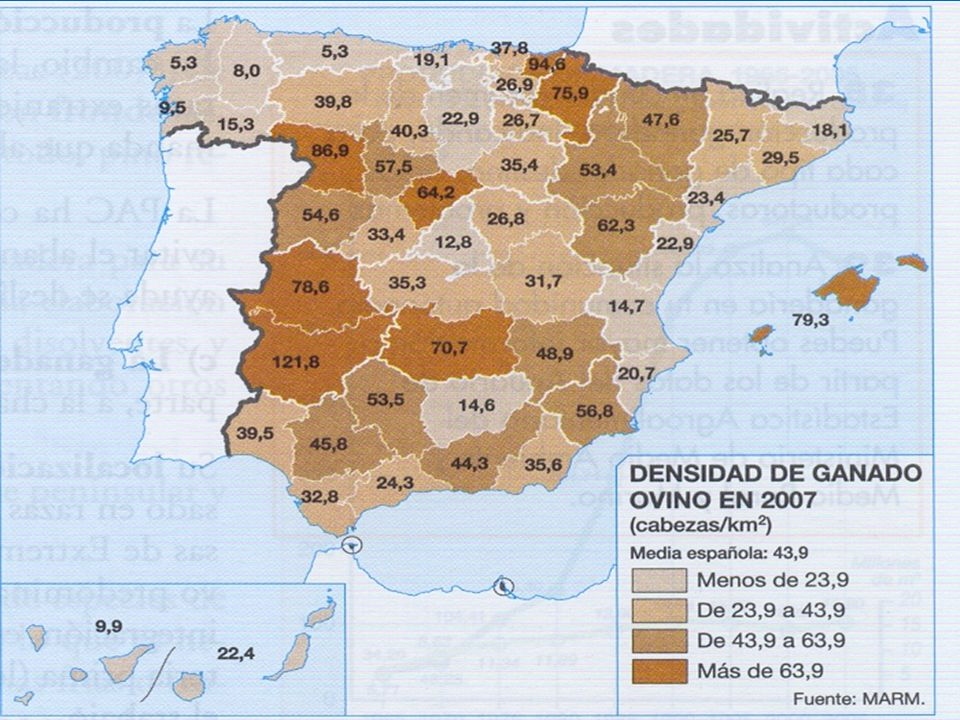 GANADO OVINO El ganado ovino se asocia tradicionalmente a los sectores interiores peninsulares.