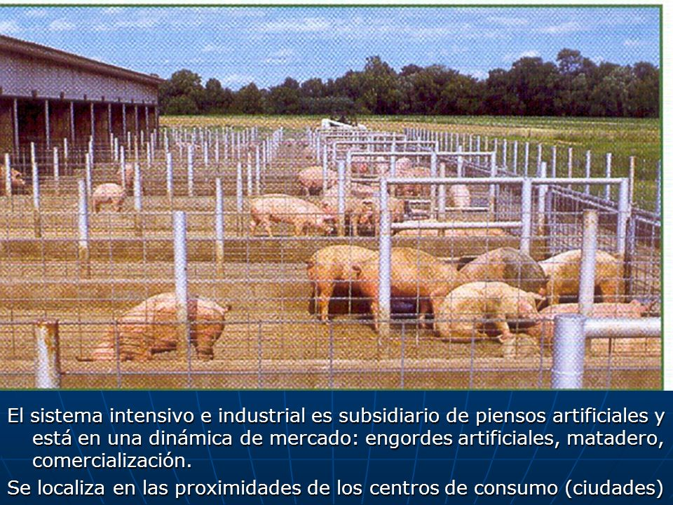 El sistema intensivo e industrial es subsidiario de piensos artificiales y está en una dinámica de mercado: engordes artificiales, matadero, comercial