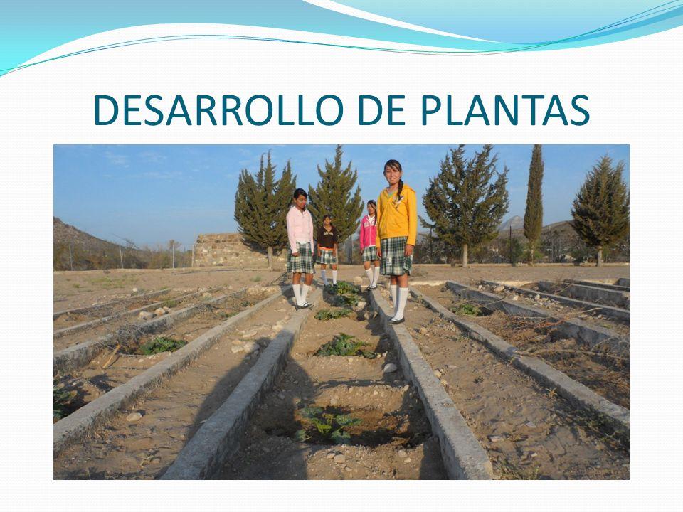 DESARROLLO DE PLANTAS