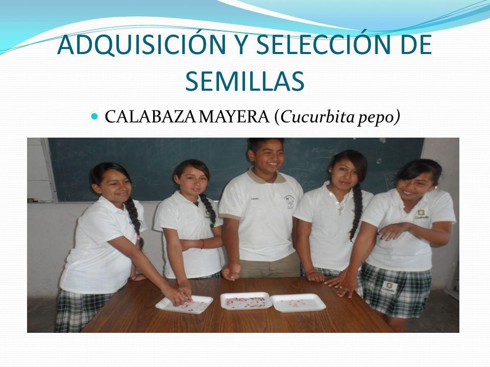 ADQUISICIÓN Y SELECCIÓN DE SEMILLAS CALABAZA MAYERA (Cucurbita pepo)