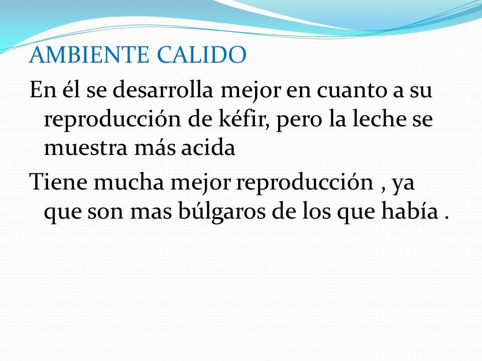 AMBIENTE CALIDO En él se desarrolla mejor en cuanto a su reproducción de kéfir, pero la leche se muestra más acida Tiene mucha mejor reproducción, ya que son mas búlgaros de los que había.