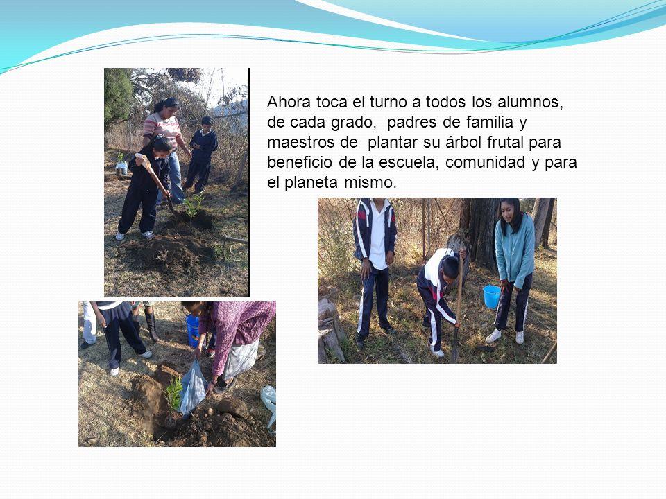 Ahora toca el turno a todos los alumnos, de cada grado, padres de familia y maestros de plantar su árbol frutal para beneficio de la escuela, comunida