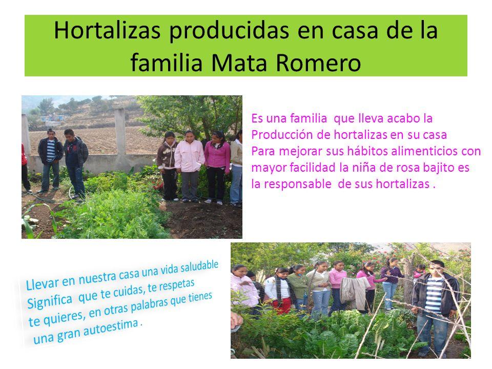 Hortalizas producidas en casa de la familia Mata Romero Es una familia que lleva acabo la Producción de hortalizas en su casa Para mejorar sus hábitos
