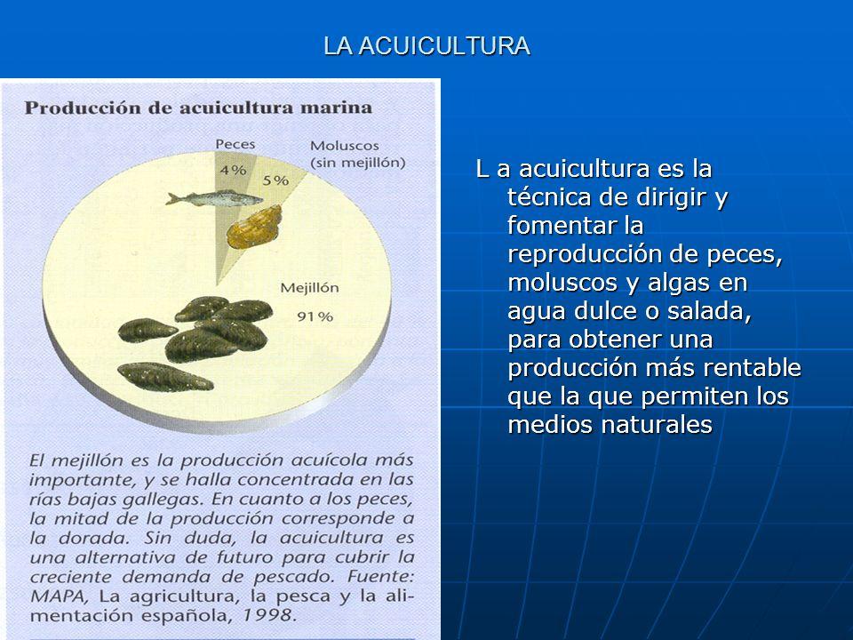 LA ACUICULTURA L a acuicultura es la técnica de dirigir y fomentar la reproducción de peces, moluscos y algas en agua dulce o salada, para obtener una