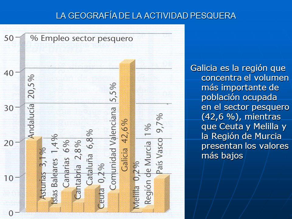LA GEOGRAFÍA DE LA ACTIVIDAD PESQUERA Galicia es la región que concentra el volumen más importante de población ocupada en el sector pesquero (42,6 %)