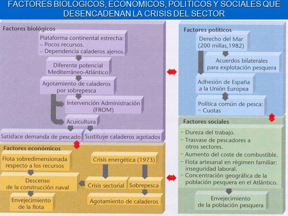 FACTORES BIOLÓGICOS, ECONÓMICOS, POLÍTICOS Y SOCIALES QUE DESENCADENAN LA CRISIS DEL SECTOR