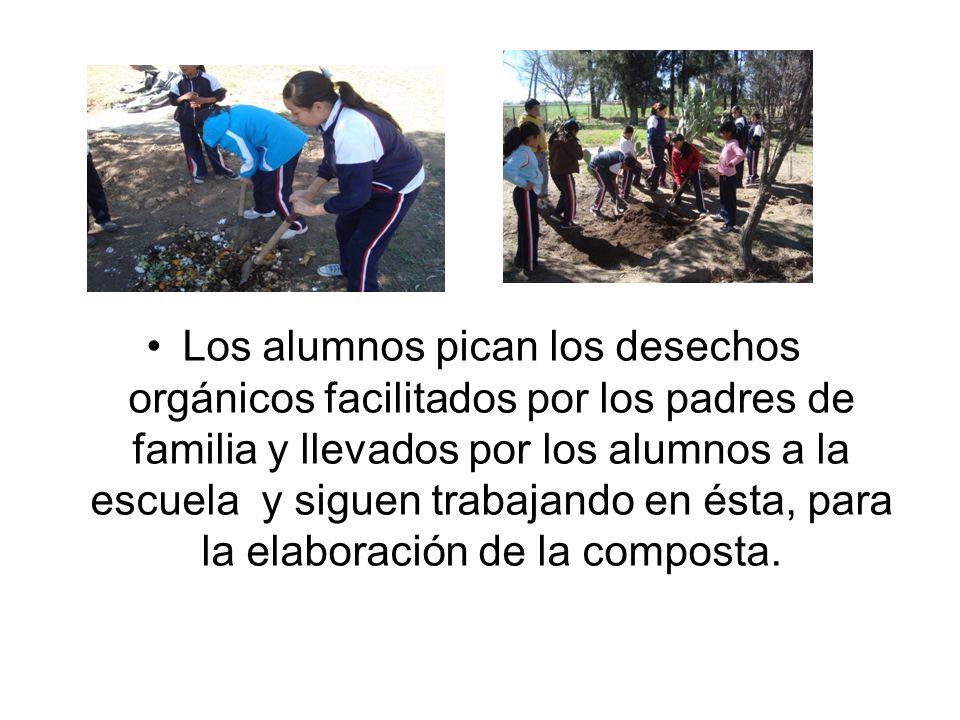 Los alumnos pican los desechos orgánicos facilitados por los padres de familia y llevados por los alumnos a la escuela y siguen trabajando en ésta, pa