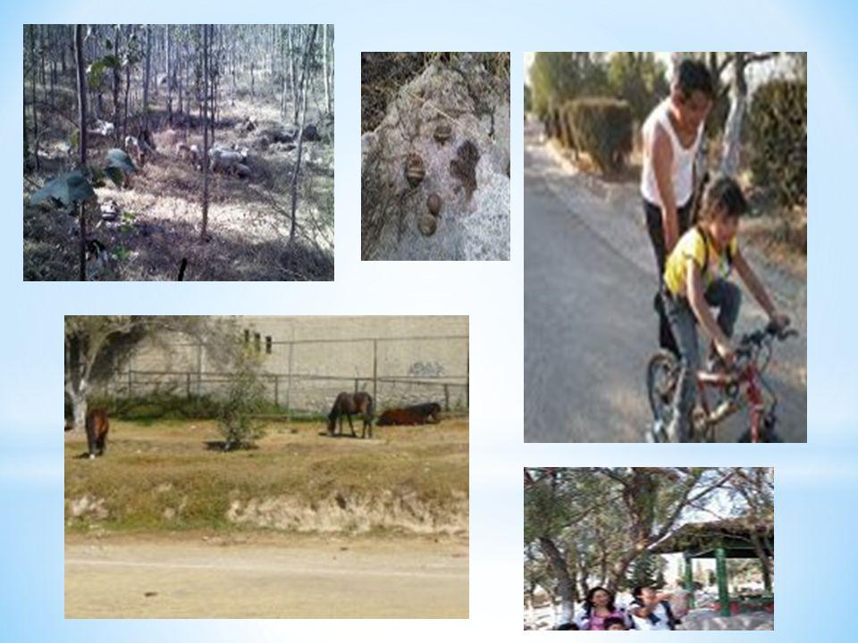 * Coinciden en que los problemas que mas afectan la comunidad son ocasionados por el descuido e irresponsabilidad de los mismos habitantes, como los perros de la calle, la basura y el daño al parque natural Sierra de Guadalupe.