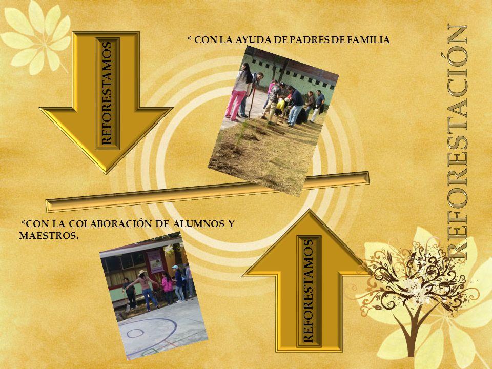 * CON LA AYUDA DE PADRES DE FAMILIA *CON LA COLABORACIÓN DE ALUMNOS Y MAESTROS. REFORESTAMOS