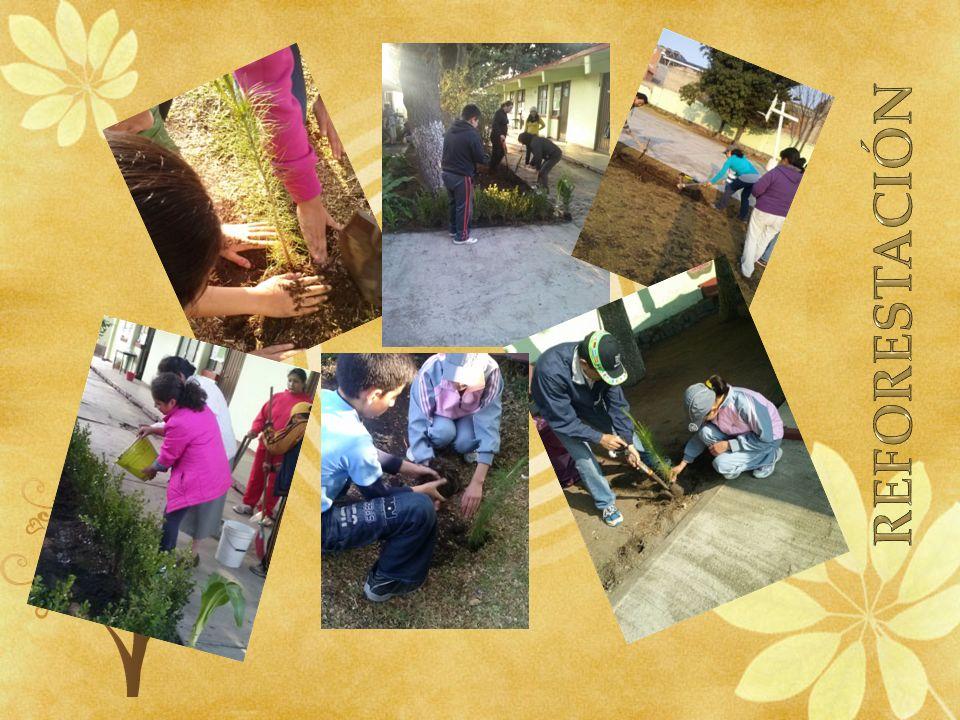 Realizamos comentarios En facebook, e invitamos a todos… A cuidar de nuestro planeta Formamos un grupo reforestación en Facebook, donde hacíamos comentarios acerca del proyecto y de nuestro planeta https://www.facebook.com/groups/304651016 304346/