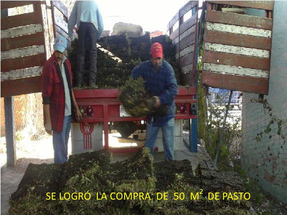 SE LOGRÓ LA COMPRA DE 50 M 2 DE PASTO SE LOGRÓ LA COMPRA DE 50 M 2 DE PASTO