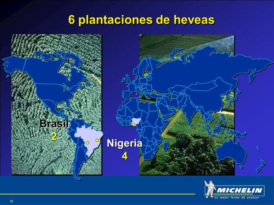 Abril 2004 12 6 plantaciones de heveas