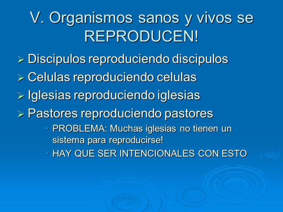 V. Organismos sanos y vivos se REPRODUCEN! Discipulos reproduciendo discipulos Discipulos reproduciendo discipulos Celulas reproduciendo celulas Celul