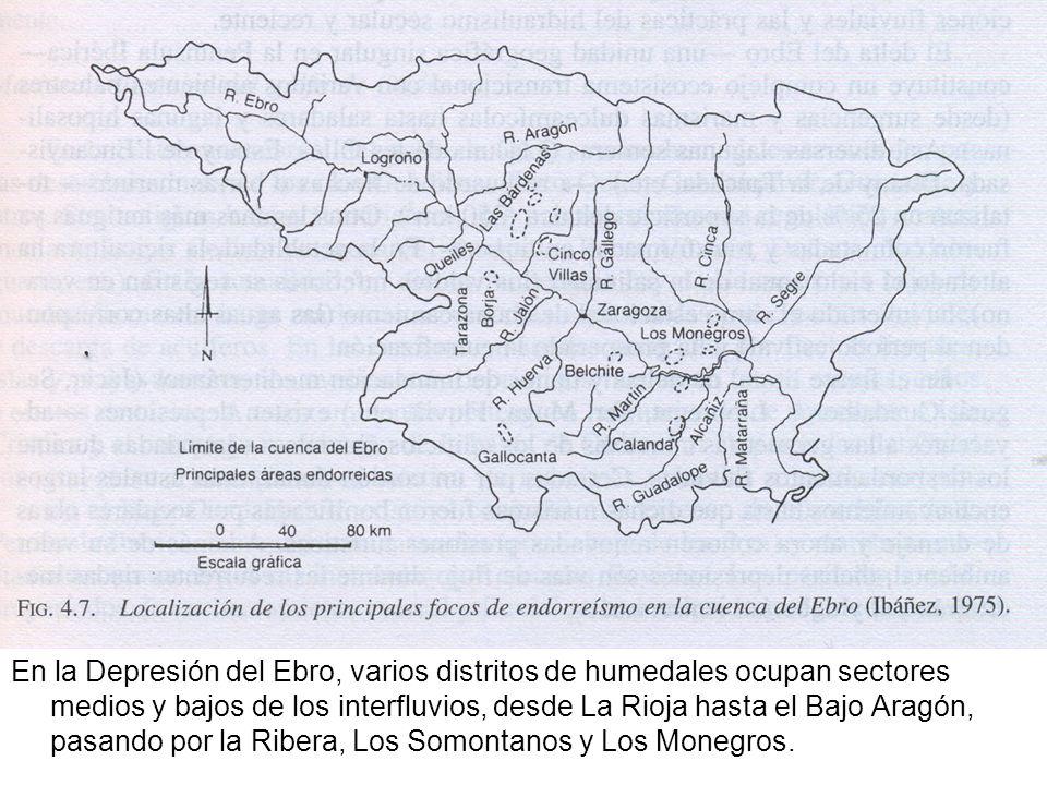 En la Depresión del Ebro, varios distritos de humedales ocupan sectores medios y bajos de los interfluvios, desde La Rioja hasta el Bajo Aragón, pasan