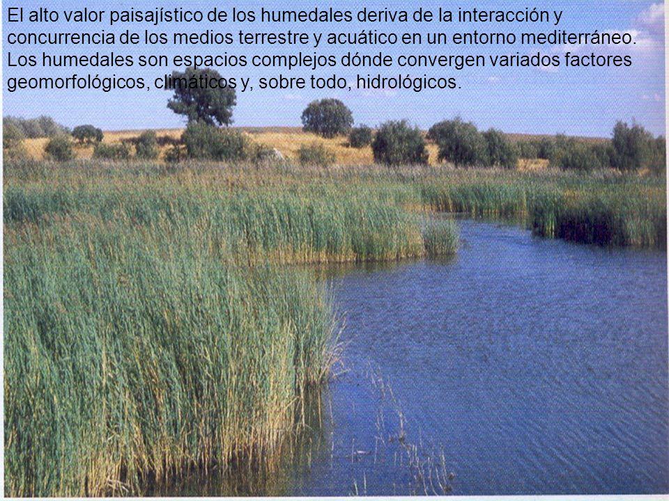 El alto valor paisajístico de los humedales deriva de la interacción y concurrencia de los medios terrestre y acuático en un entorno mediterráneo. Los