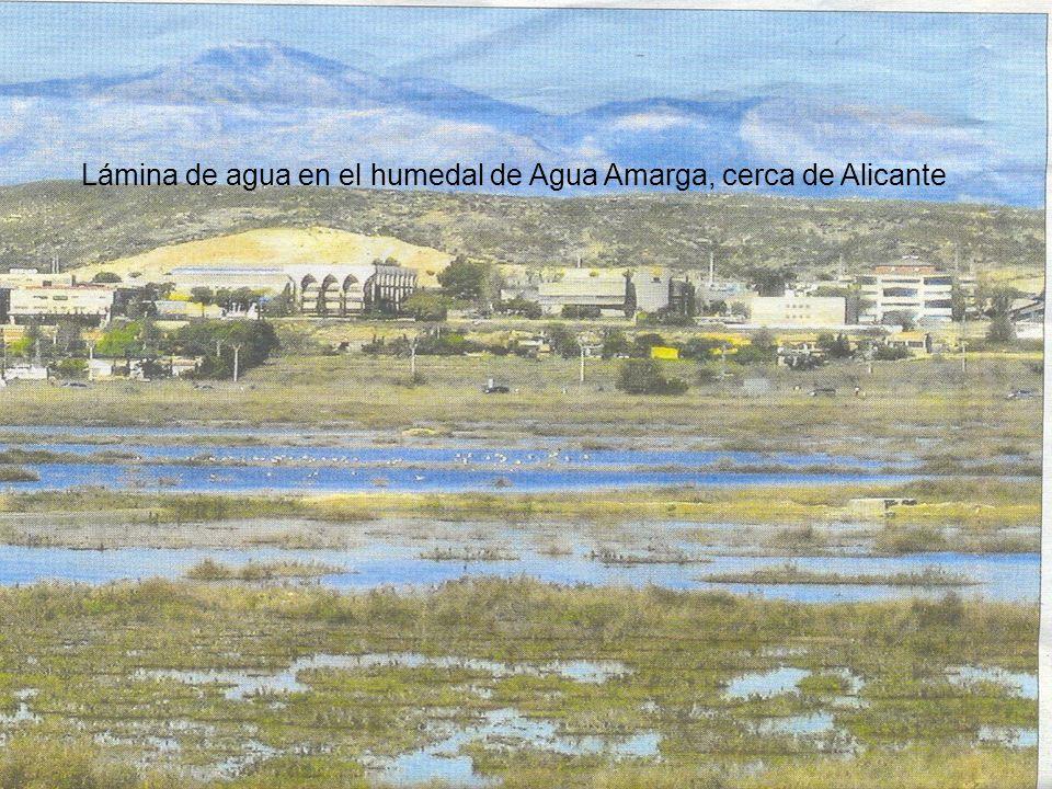 Lámina de agua en el humedal de Agua Amarga, cerca de Alicante