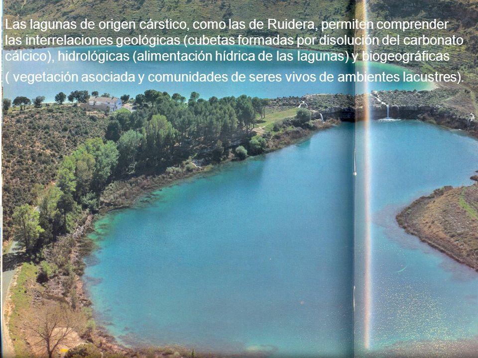 Las lagunas de origen cárstico, como las de Ruidera, permiten comprender las interrelaciones geológicas (cubetas formadas por disolución del carbonato