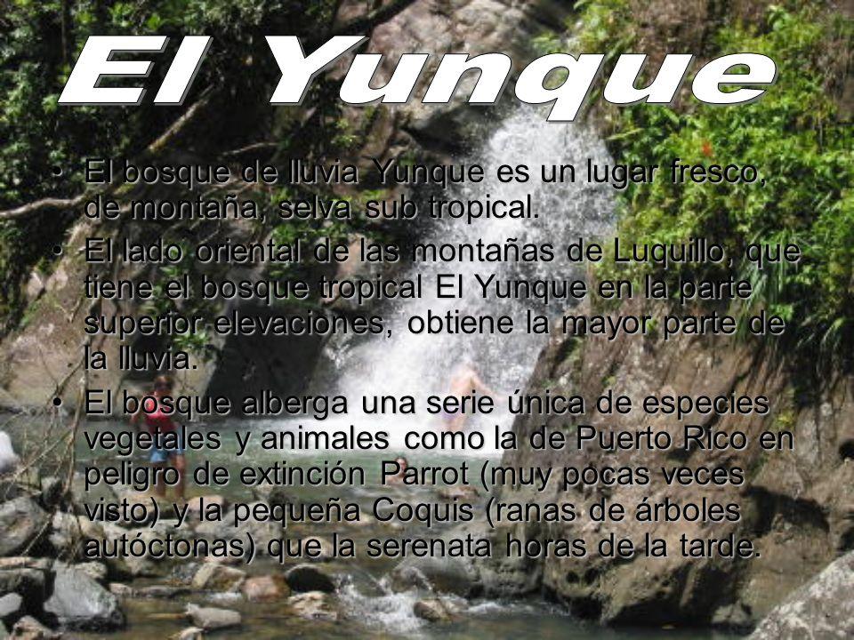 El bosque de lluvia Yunque es un lugar fresco, de montaña, selva sub tropical.El bosque de lluvia Yunque es un lugar fresco, de montaña, selva sub tro