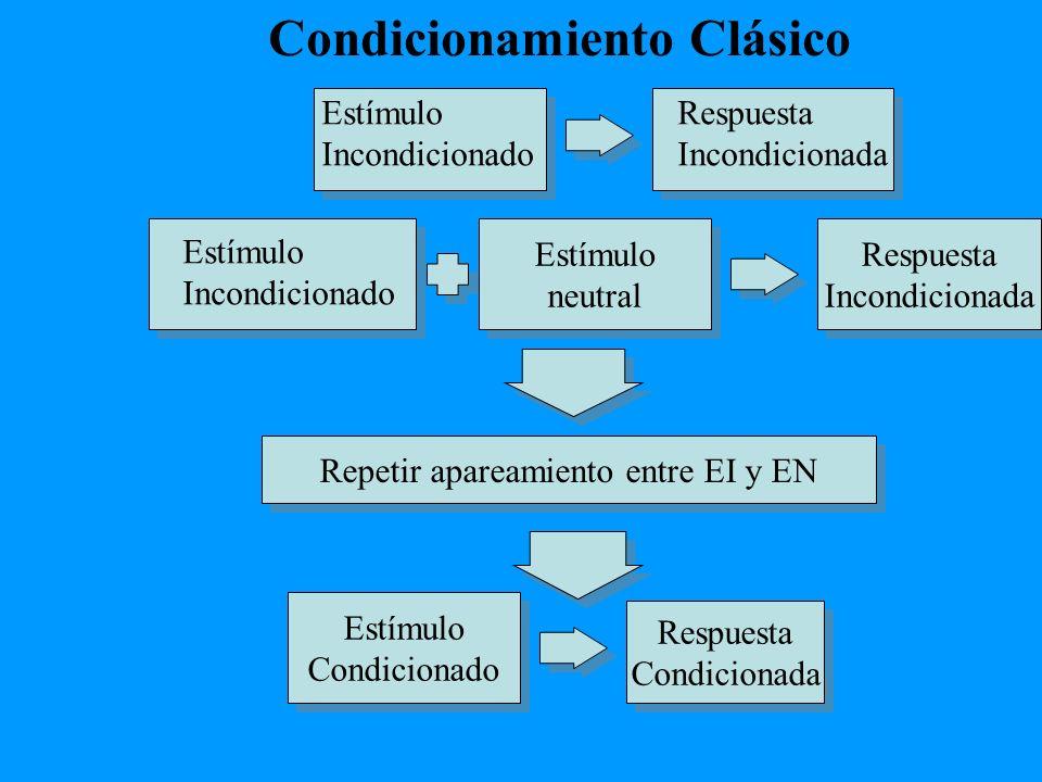 Estímulo neutral Estímulo neutral Respuesta Incondicionada Respuesta Incondicionada Estímulo Condicionado Estímulo Condicionado Respuesta Condicionada