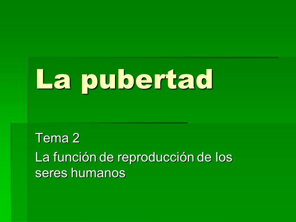 La pubertad Tema 2 La función de reproducción de los seres humanos