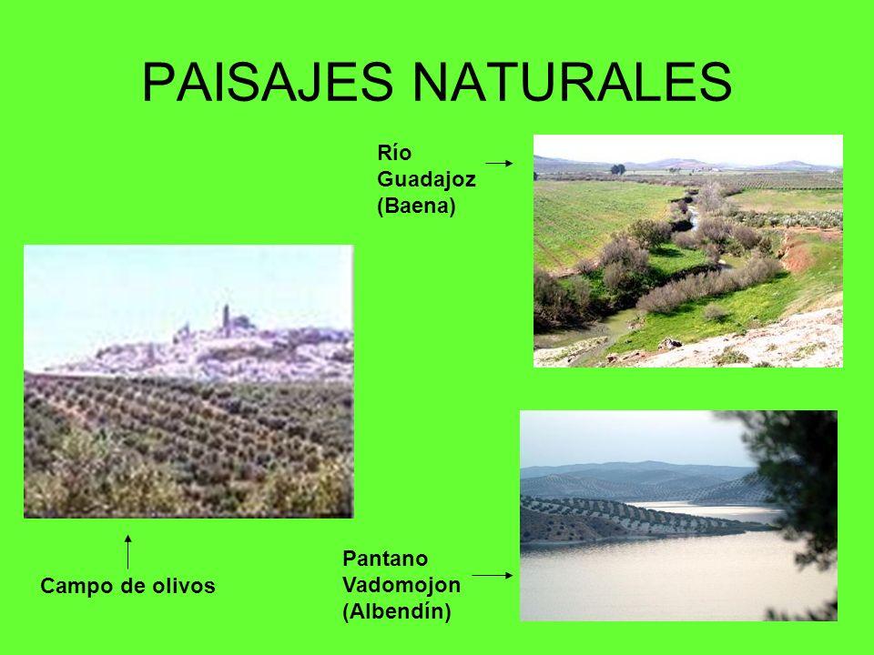 PAISAJES NATURALES Campo de olivos Pantano Vadomojon (Albendín) Campo de olivos Río Guadajoz (Baena)